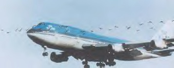 Aircraft bird strike photo